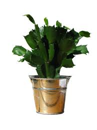 Plants Indoor by Pots Fascinating Home Pot Delray Plants Cat Palm Pot Decorating