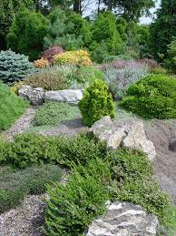 Rock Garden Society by Rock Garden Dwarf Conifers Dwarf Rock And Gardens