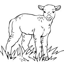 baby lamb coloring color lamb sheep projects