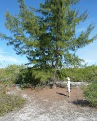 non native plants in florida last dance west florida state parks