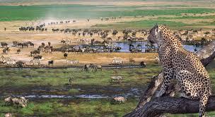 safari serengeti wildlife safari itinerary u0026 map wilderness travel