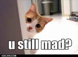 Mad Kitty Meme - lolcats u still mad