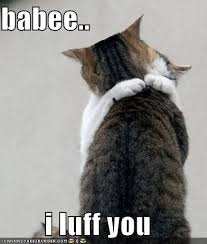 Cat Hug Meme - 34 best lolcats images on pinterest funny animals funny animal