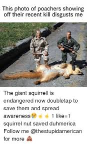 Squirrel Nuts Meme - 25 best memes about squirrel nut squirrel nut memes