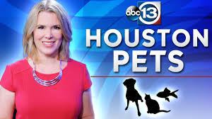 survey to count the homeless dogs in houston abc13 com