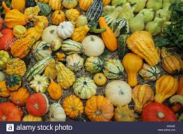 small pumpkins small decorative pumpkins for party for sale at the