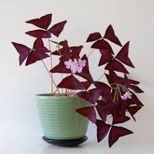 Low Light Indoor Flowers Best 25 Indoor Flower Pots Ideas On Pinterest Indoor Pots And