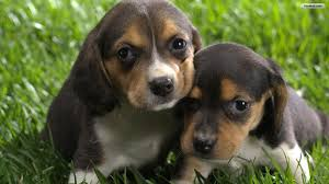 Cute Dogs Wallpapers by Youwall Cute Dogs Wallpaper Wallpaper Wallpapers Free