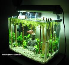 tank scape my planted buddha betta tank