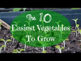 beginner gardening the 10 easiest vegetables to grow youtube