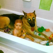 Dogs In The Bathtub Eyed Dog Is The World U0027s Best Bathtub Lifeguard Photo