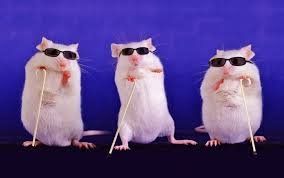 Are Mice Blind Scientists Partially Restore Blind Mice U0027s Eyesight