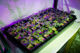 Colorado Flag Marijuana America U0027s Quality Cannabis Is Changing The U0027drug War U0027 Medical