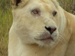 nspca u0027s formal stance selective breeding wild animals