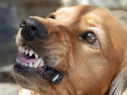 Types Of Dogs Common Type Of Dog Aggression Bullys Behaven