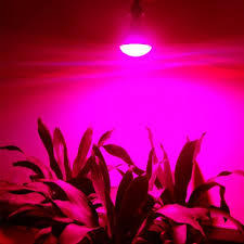 20w led plant grow light bulb red blue white lights for garden