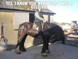 Horse Riding Meme - horse rider horseridercom twitter