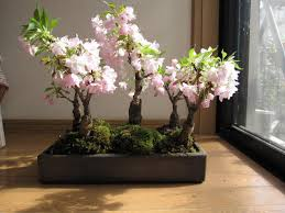 growing these bonsai trees would require a lot of your time and