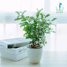Fragrant Potted Plants - buy wood fragrance indoor office plants potted plants purify the
