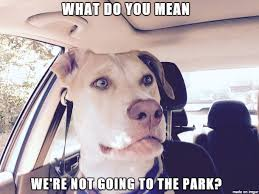 Confused Dog Meme - confused dog meme on imgur