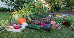 free photo harvest autumn garden vegetables vegetable garden max