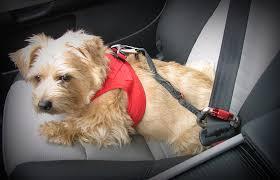 my curli fashydogs hundeshop curli auto sicherheitsgurt für hunde