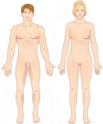 Human Anatomy Terminology Positions Of The Body In Anatomy Anatomical Terminology Wikipedia