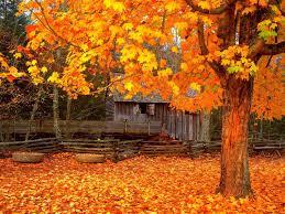 trees fall nature autumn color season forest landscape tree photos