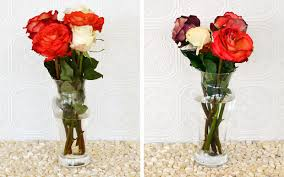 Vases Of Roses How To Keep Roses Alive More Com