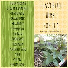 how to grow and use herbs preparednessmama