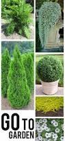 sweet viburnum 200mm pot viburnum 27 best backyard redo images on pinterest shrubs garden plants