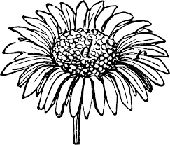 daisy clipart line drawing pencil and in color daisy clipart