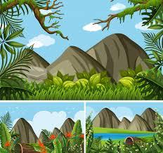 jungle vectors photos psd files free download