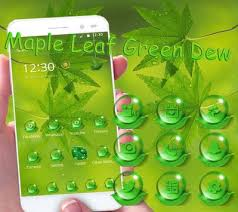leaf green apk free maple leaf green dew theme apk free lifestyle app for