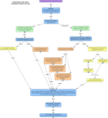 Cell Reproduction Concept Map Answers Answers Virus Life Cycle Html