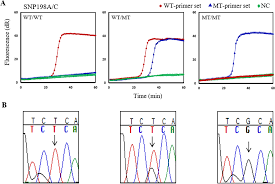 isothermal diagnostic assays for monitoring single nucleotide