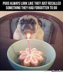 Dog Lady Meme - dog forget funny haha hilarious meme pug first set on
