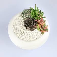indoor succulent planter kit in white ceramic bowl u2013 the art of