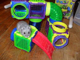 halloween cage decorations hamster diy youtube 10 fun things to do with your hamster dwarf hamster blog