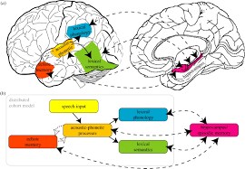 a complementary systems account of word learning neural and