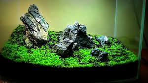 Aquascaping Plants Ultimate Aquascape Plants 2017 Youtube