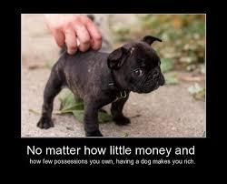 Rich Cat Meme - dogs makes you rich meme slapcaption com on we heart it