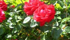 grow the best flowers for a cutting garden moms need to know