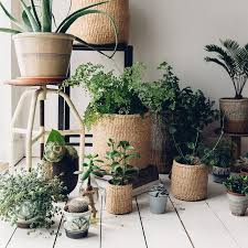 Garden Supplies 110 Best Indoor Garden Supplies Images On Pinterest Garden