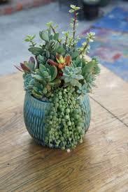 3606 best succulent plant ideas images on pinterest succulent