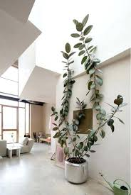 best low light house plants large indoor plant low light indoor plants low light