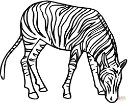 zebra 4 coloring page free printable coloring pages realistic