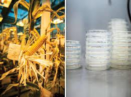 chemchina syngenta deal china u0027s 43 billion bid for food security