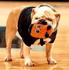 english bulldog halloween costumes jack the bulldog u2013 the fourth edition the hoya u0027s blog