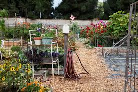 at cornucopia community garden even the bug spray is diy l a